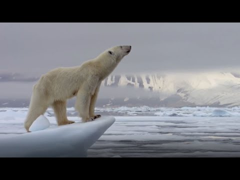 Best Polar Bear Moments | Part 1 | BBC Earth