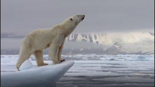 Best Of Polar Bears | Part 1 | BBC Earth