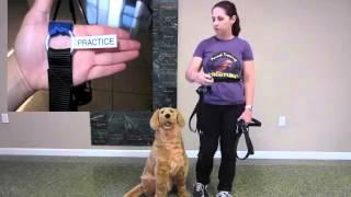 Valley Animal Center Harness Training Video