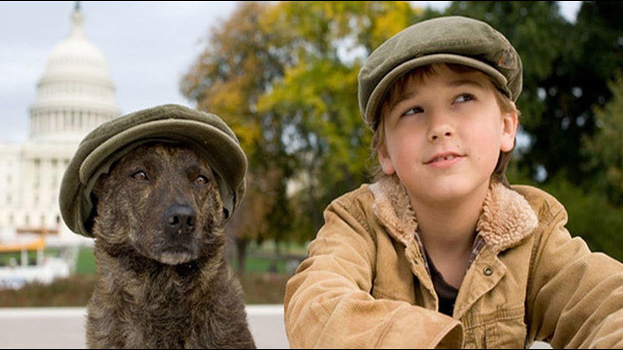 современном картинки пес по имени актуальны осенний период