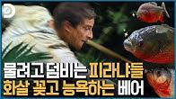👿피라냐 : 내 이빨을 받아라! 🤣베어 : 내 얘빼랠 배대래~ㅋㅋㅋㅋ 피라냐 참교육하는 베어그릴스! [Man vs Wild]