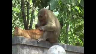 Love of Cat and Monkey