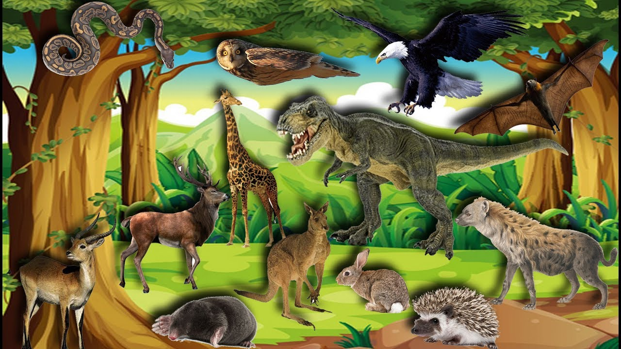 image Động Vật Hoang Dã | Bé Học Con Vật | Con Gì Đây | Learn about wild animals