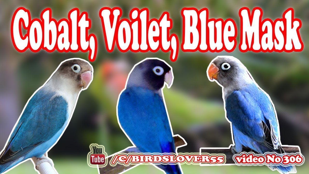 Difference Between Blue Mask Cobalt And Violet Video No 306 Youtube