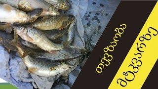 mtkvarze tevzaoba paplaokit---Fishing on the Mtkvari