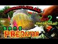 Pemancing Umpan Ikan Nila Paling Sakti Di Jagat Ini Ikannila Ikanlouhan  Mp3 - Mp4 Download