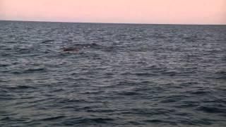 dolhins and sunrise excursion mallorca