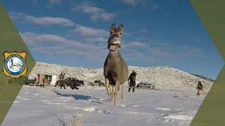 Upper Powder River Mule Deer S…