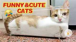 Funny CATS - HOLD YOUR LAUGH IF YOU CAN (CHALLENGE) compilation#63❤️