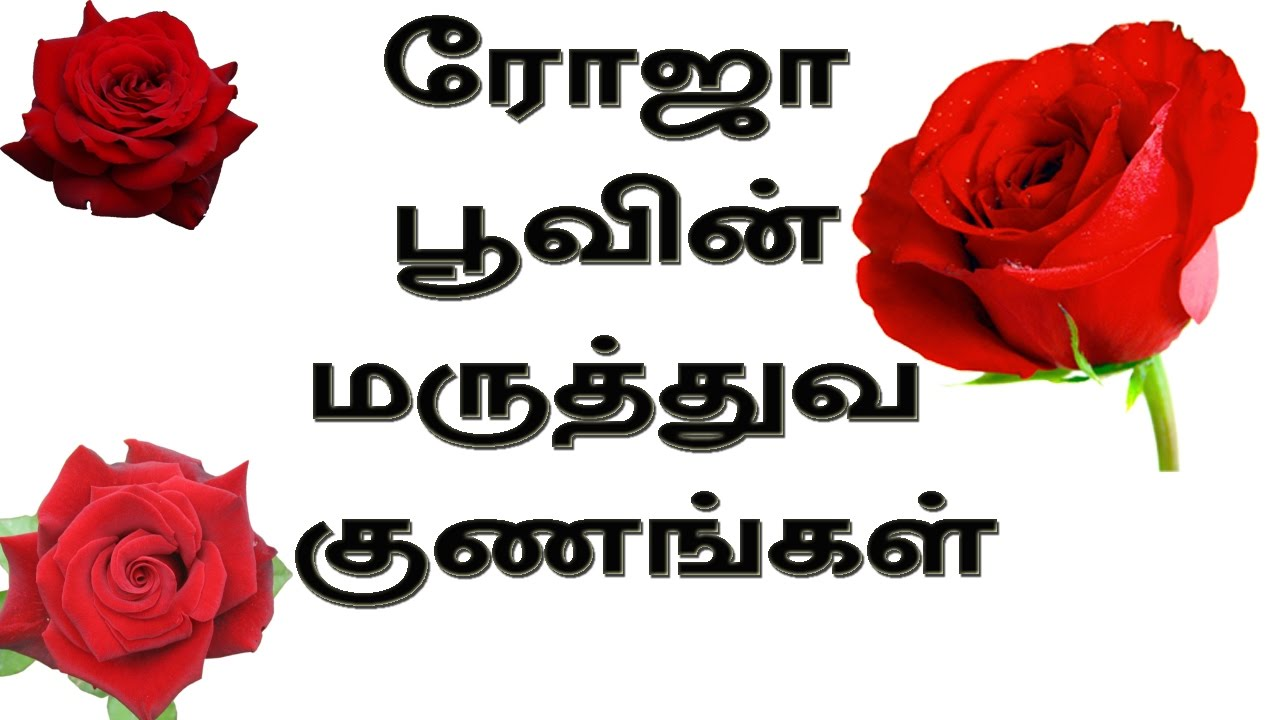 Rose Flower Medicinal Uses In Tamil Youtube