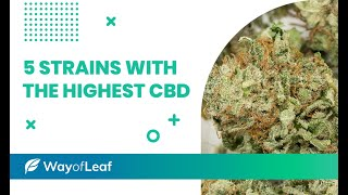The 5 Best High-CBD Cannabis Strains