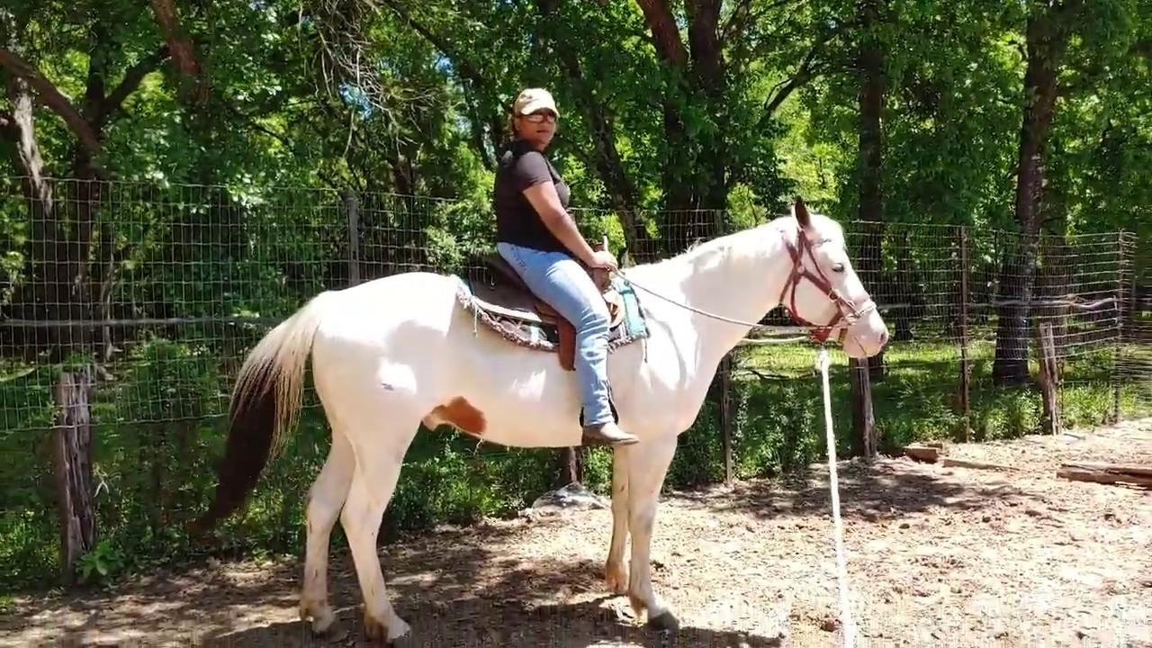 Adult Beginner Western riding lessons - groundwork and riding exercises