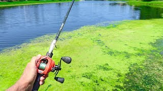 This SMALL POND is LOADED w/ GIANT Bass (Topwater Fishing)