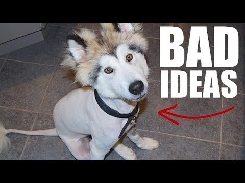 5-mistakes-almost-all-husky-owners-make!