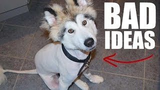 5 Mistakes Almost ALL Husky Owners Make!