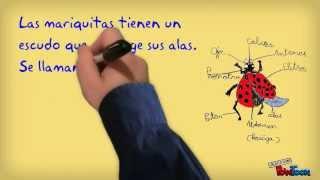 Cuento-documentales de Sofía.  Las Mariquitas (Coccinellidae)