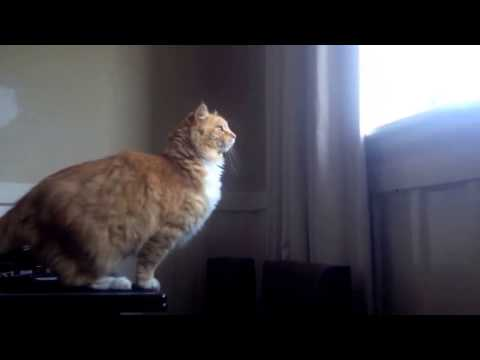 Cat Jump Fail Is Short But Oh-So Sweet (VIDEO)