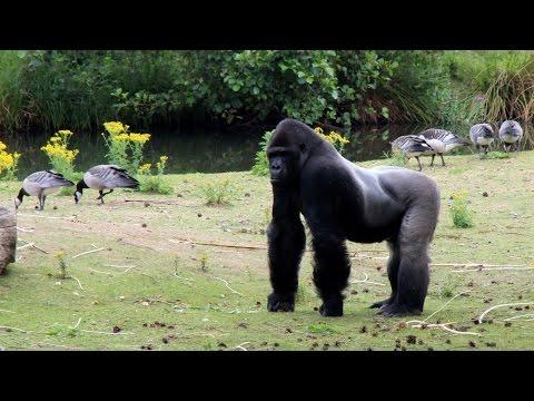 Safaripark Beekse Bergen (Hilvarenbeek)