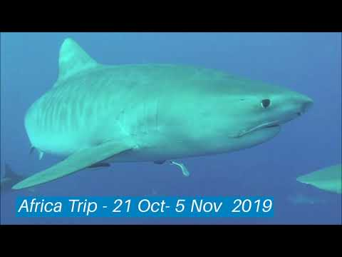 South Africa Dive Trip