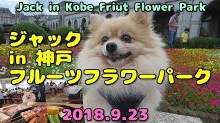 2018年9月23日、愛犬ジャックと「道の駅 神戸フルーツ・フラワーパーク...