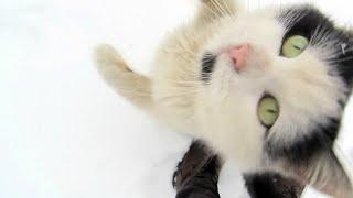 Сat and snow/Кошка и снег.