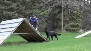 Sasha (german Shepherd Dog) Boot Camp Dog Training Video