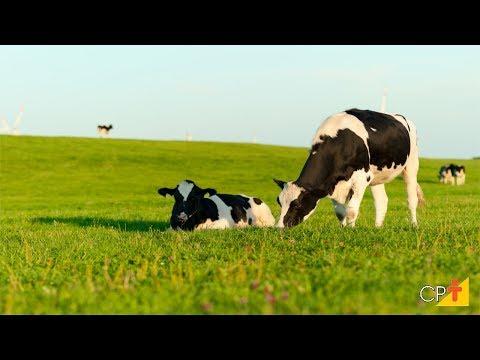 Clique e veja o vídeo Curso Adubação de Pastagens CPT