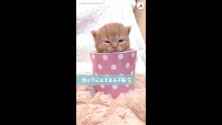 【ここに入ると落ち着くニャ…♪】カップにすっぽり収まる子猫ちゃん♡