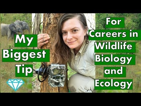 Biggest Tip For Careers In Wildlife Biology And Ecology | Fancy Scientist