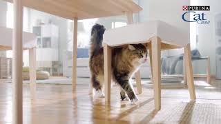 Cat Chow - Сила природы в каждом движении