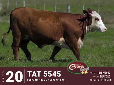 LOTE 20 - TAT 5545