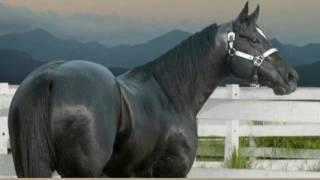 Konie piękne zwierzęta💖#7
