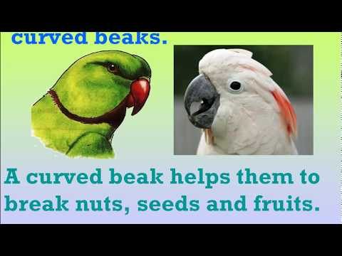 Birds Beaks and Claws Part 1 Class 3 Science - YouTube