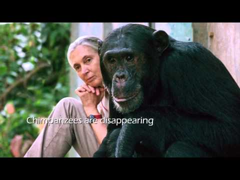 The Jane Goodall Institute - Gombe, 50 Years of Research and Inspiration