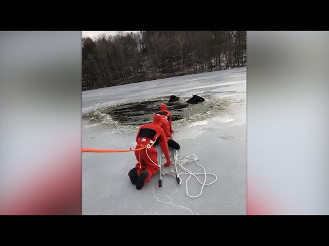Andi and Kenny  - Responders Rescue 2 Clydesdale Horses from Icy Lake in the Poconos