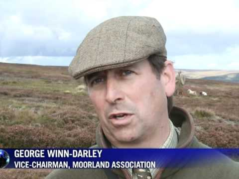 Bumper grouse-shooting boosts rural Britain