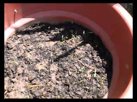semilleros caseros referencia de palmiser