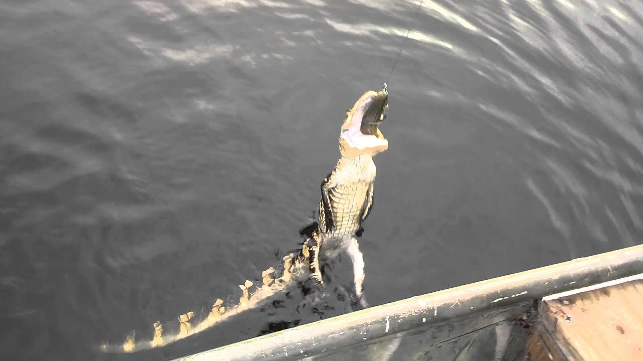 Alligator on a frog lure youtube for Gar fishing lures