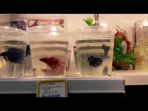 Иду в зоомагазин покупать новую рыбку!