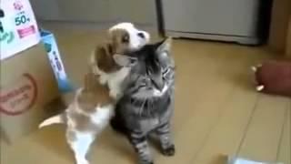 самые смешные видео про животных, со всего рунета