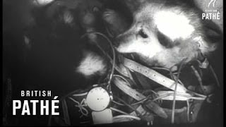 Russian Space Dogs (1961)