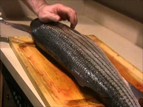 How To: Filet and Trim A  Striped Bass