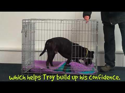 Troy - Dogs Trust Merseyside