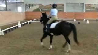 Sydnie @ Majestic Farm February Frolic USDF Intro Test C