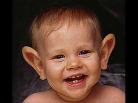 Big Ears Pictures Www Pixshark Com Images Galleries