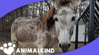 Rescued Donkey Makes Miraculous Recovery | Animalkind