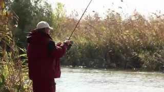 Рибалка в Астрахані - сазан у жовтні.
