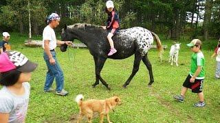 Northpole stable 2015  乗用馬セール2歳馬 スターダービー