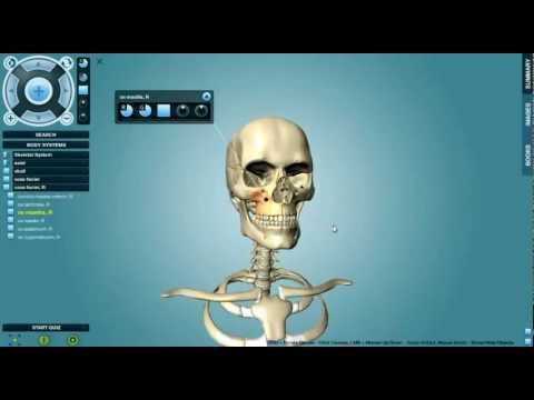 Anatronica 3D Anatomy Pro For Windows And Mac