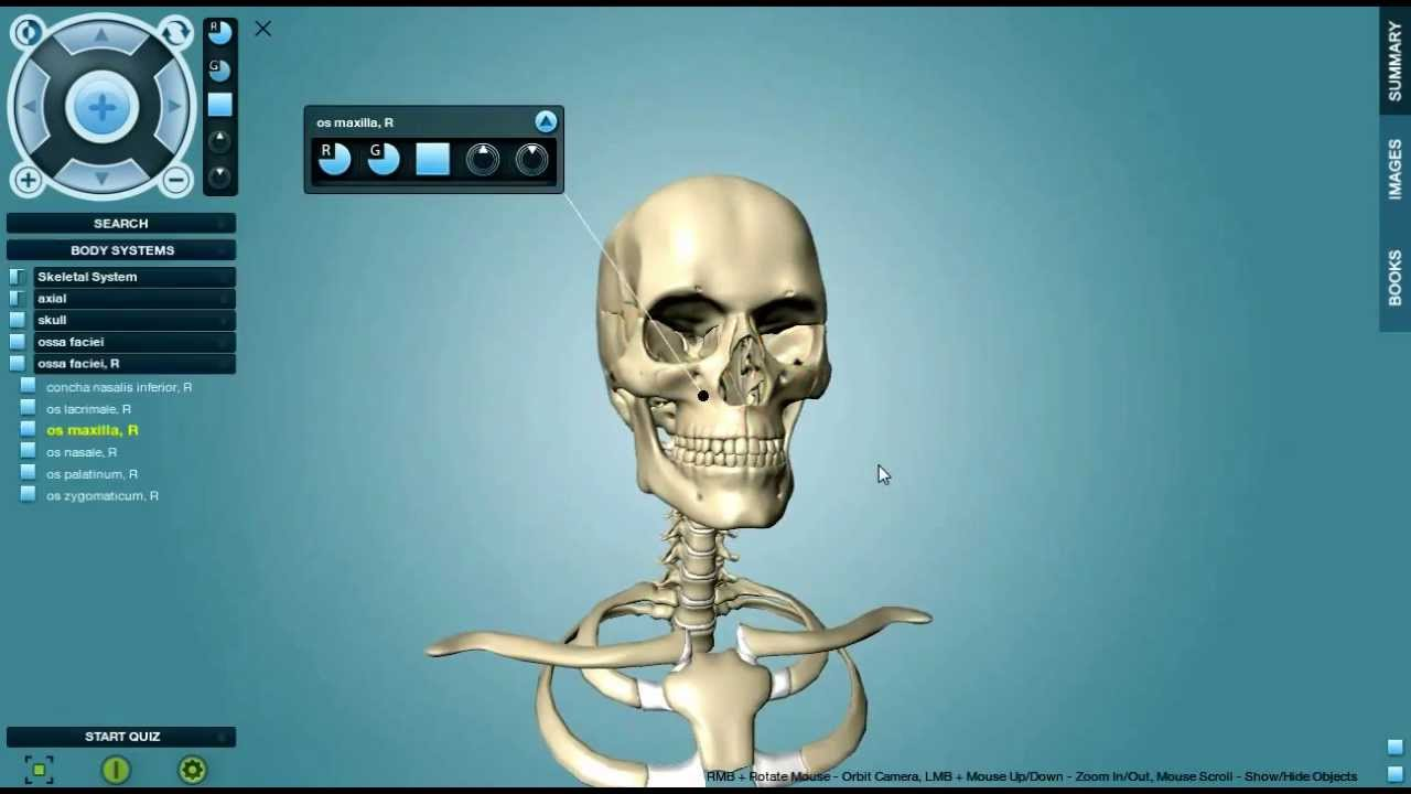 Anatronica 3D Anatomy Pro for Windows and Mac - YouTube